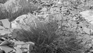 Almeria #109