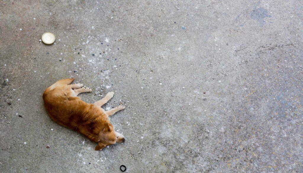 Sleeping-Dog